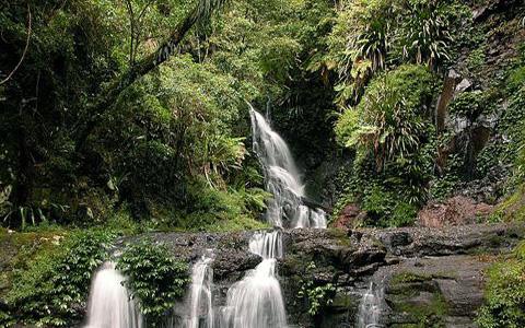 Дождевые леса острова Фрейзер