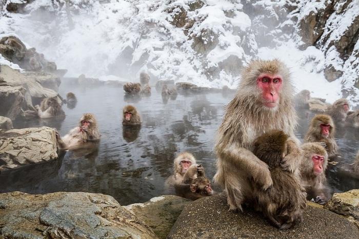 Парк обезьян Джигокудани